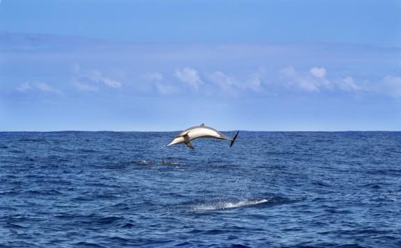 La Réunion, Le top 12 des choses à faire et à voir à La Réunion en 2021